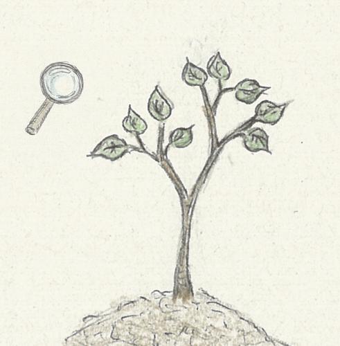 Lupe, Pflanze