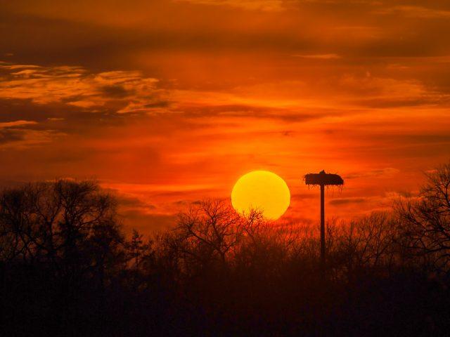 Storchenhorst im Sonnenuntergang